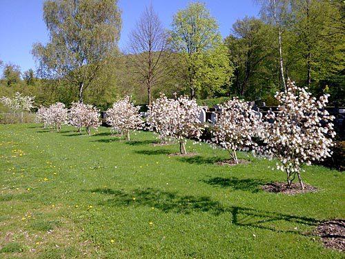 Friedhofserweiterung Oberweier, Ettlingen 2
